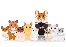 Group of hamster breeds. Group of hamsters, various breed in a row standing stock illustration