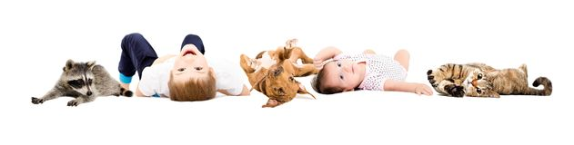Group of happy children and pets stock photo