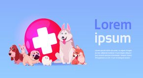 Group Of Happy Dogs Over Vet Clinic Icon Veterinary Medicine Concept Stock Photo