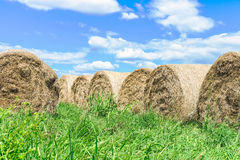 Group of hay bales in green grass Royalty Free Stock Image