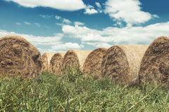 Group of hay bales in green grass with blue sky and white clouds in the background Royalty Free Stock Photo