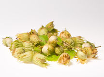 Group of hazel nuts isolated on white background Stock Photography