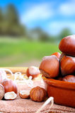 Group of  hazelnuts on a wooden table in field vertical composit Stock Photography