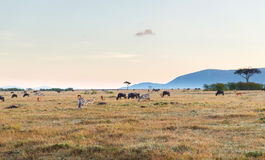 Group of herbivore animals in savannah at africa. Animal, nature and wildlife concept - group of different herbivore animals in maasai mara national reserve Stock Image