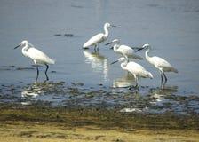 Group of Herons-b Stock Photo