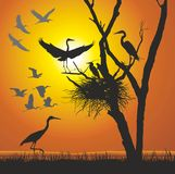Group herons at sunset. Vector illustration herons nest in the dry tree Stock Photography