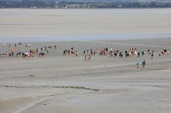 Group of hikers in the bay at low tide. Hike in the bay with a knowledgeable guide. Mont Saint-Michel , Normandy,. Le Mont-Saint-Michel, France - September 13 royalty free stock image