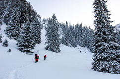 Group of hikers  in Carpathian mountains Royalty Free Stock Images