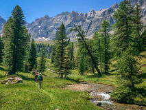 Group of hikers in a green meadow with pine trees, Queyras, the Alps Stock Image