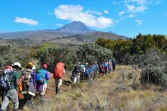 Hikers at Mount Kilimanjaro, Tanzania. A group of hikers at the high altitude moorland of Mount Kilimanjaro, Tanzania stock photography