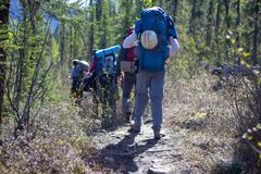 Group of hikers hiking in forest. Hiking in Alaska stock images