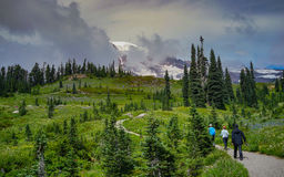 The Group of Hikers Hiking into the Mountain. A group of hikers is hiking in the field at Deadhorse trail with Mount Rainier in the background, Washington Stock Photo