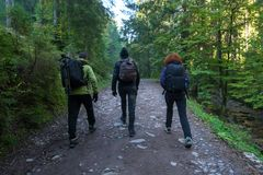 Group of hikers on a trail. In the mountains Stock Photo