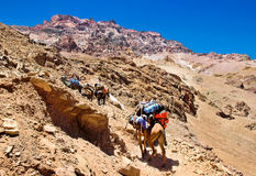 Group of hikers trekking in the Andes, Argentina Royalty Free Stock Images