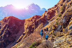 Group of Hikers walking on Mountain Trail rear View sunny Background royalty free stock photos