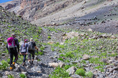 Group of Hikers Walking on Trail Backs. Large Group of People Sport Clothing Going on Rocky Moraine Up towards Mountain Pass Peaks Large Flock of Sheep pasturing royalty free stock photo