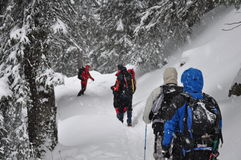 Group hiking in snowstorm. A winter scene with group walking on snowstorm Royalty Free Stock Photos
