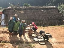 Group of hill tribe women in northern of Thailand are pounding r. Hill tribe women in northern of Thailand are pounding rice Royalty Free Stock Photography