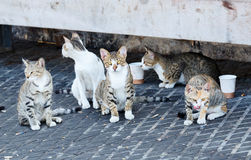 Group homeless cats. Under a concrete bench in sea port Stock Photography
