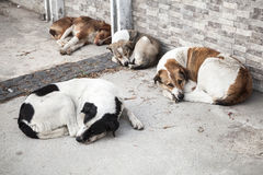 Group of homeless dogs sleep on the street Stock Photo