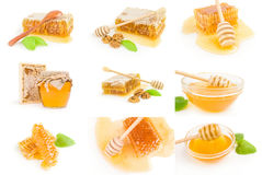 Group of Honey bee isolated on a white background cutout Royalty Free Stock Photos