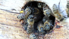 Group of honeybees flying Stock Photos