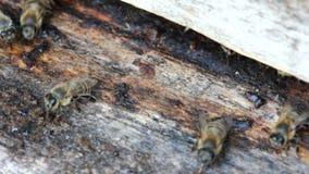 Group of honeybees flying Stock Photo