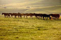 a group of horse Stock Image