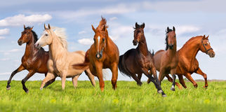 Group of horse run. Horse herd run in beautiful green meadow stock image