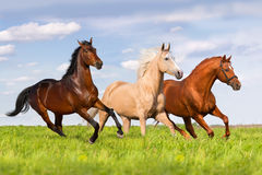 Group of horse run stock photo