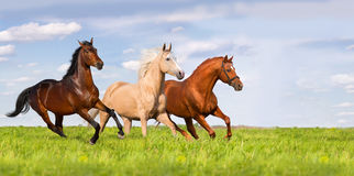 Group of horse run. Three horse run in beautiful green meadow Stock Photography