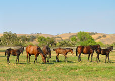 Group of horses. Horses in a field together stock photo