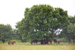 Group of Horses. In a natural environment Stock Images