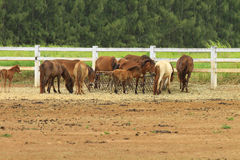 Group of horses Stock Images