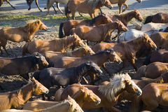 A group of horses Royalty Free Stock Photos