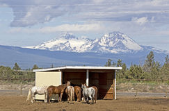 Group of horses with Cascade Mountains in Background Royalty Free Stock Photography