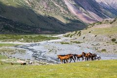 Group of horses with colts Royalty Free Stock Photo
