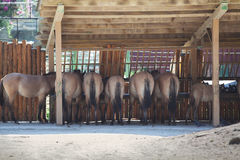 Group of horses drinking water under a wooden roof Stock Image
