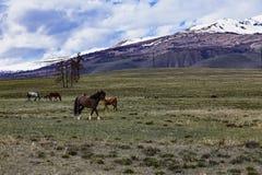 Horses traveling free Stock Photo