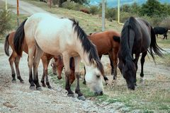 Group of horses glazing. Near the road royalty free stock photography