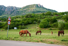 The group of horses is grazed against mountains Royalty Free Stock Photography