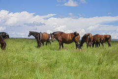Group of horses grazing in prairie Stock Image
