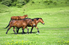 Group of horses on a green field Stock Photo