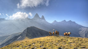 A group of horses in a meadow in front of the Aiguille d'Arves m Stock Photos