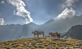 A group of horses in a meadow in front of the Aiguille d'Arves m Stock Photo