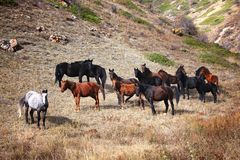 Group of horses in mountains Royalty Free Stock Photography