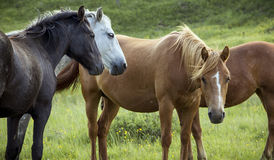 Group of horses on pasture Stock Photo