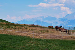 Group of horses in a pound in the alps Royalty Free Stock Photography