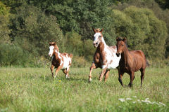 Group of horses running in freedom Stock Photo