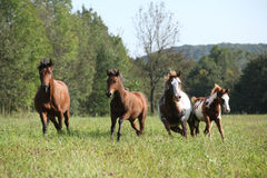 Group of horses running in freedom Stock Photos